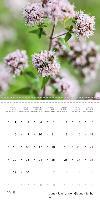 WILD AND HEALTHY Edible wild plants (Wall Calendar 2015 300 × 30 - zum Schließen ins Bild klicken