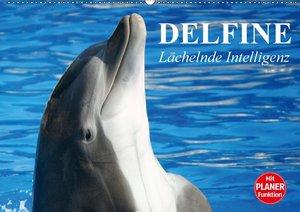 Delfine - Lächelnde Intelligenz