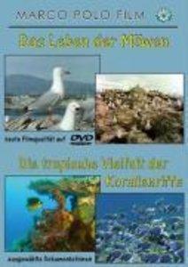 Leben Der Möwen/Korallenriffe