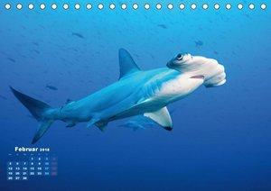 Tiere des Meeres: Faszination Tauchen (Tischkalender 2018 DIN A5