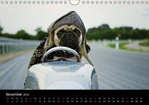 Der MOPS-Kalender (Wandkalender 2016 DIN A4 quer)