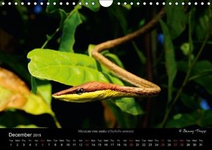 SNAKES / UK-Version (Wall Calendar 2015 DIN A4 Landscape)