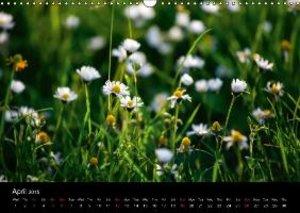 Jager, T: Summer Meadow / UK-Version