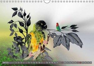 Papageien Zeichnungen (Wandkalender 2016 DIN A4 quer)