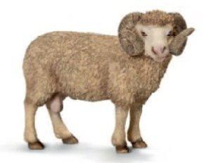Schleich 13726 - Farm Life: Widder