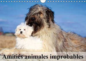 Amitiés animales improbables (Calendrier mural 2015 DIN A4 horiz