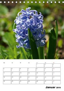 Frühlingserwachen (Tischkalender 2016 DIN A5 hoch)