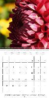 Colors of Dahlias (Wall Calendar 2015 300 × 300 mm Square) - zum Schließen ins Bild klicken