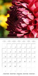Colors of Dahlias (Wall Calendar 2015 300 × 300 mm Square)