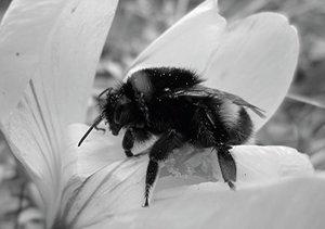 Insekten-Power (Tischaufsteller DIN A5 quer)