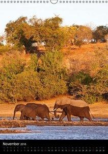 Sanfte Riesen - Afrikas Elefanten (Wandkalender 2016 DIN A3 hoch