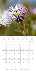 Flowers of Majorca (Wall Calendar 2015 300 × 300 mm Square)