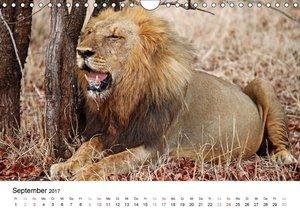 KRÜGER NATIONALPARK Afrikas Perle (Wandkalender 2017 DIN A4 quer