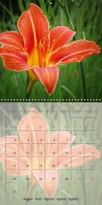 The Orange Garden (Wall Calendar 2015 300 × 300 mm Square)