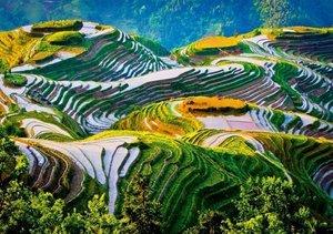 Die Reisfelder Asiens (Tischaufsteller DIN A5 quer)