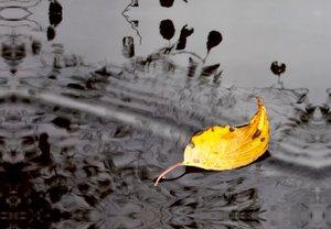 Premium Textil-Leinwand 45 cm x 30 cm quer Herbstblatt