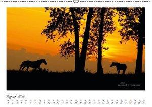 Westernpferde - Faszination und Leidenschaft (Wandkalender 2016