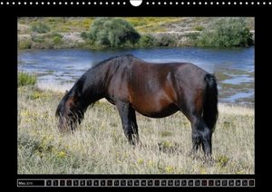 Garranos - Endangered Wild Horses of Europe (Wall Calendar 2015