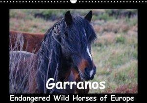 Garranos - Endangered Wild Horses of Europe (Wall Calendar 2015
