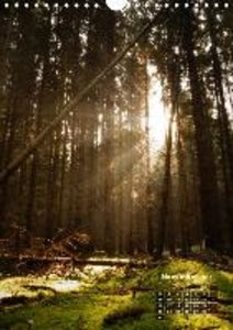 Backlighting in the forest (Wall Calendar 2015 DIN A4 Portrait)