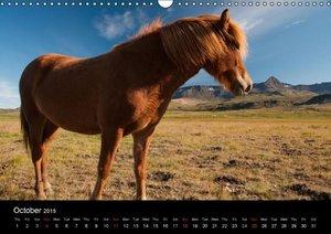Horses of Iceland (Wall Calendar 2015 DIN A3 Landscape)