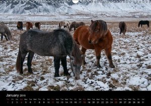 Horses of Iceland (Wall Calendar 2015 DIN A3 Landscape)