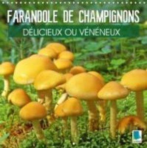 Farandole de champignons - Délicieux ou vénéneux (Calendrier mu