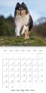 Lovely Collie 2015 (Wall Calendar 2015 300 × 300 mm Square)