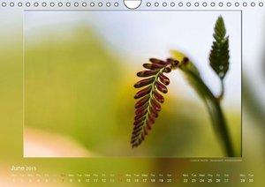 Blossom Contemplations (Wall Calendar 2015 DIN A4 Landscape)