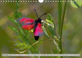 Di Chito, U: Lepidoptera - The Season of the Butterfly - UK - zum Schließen ins Bild klicken