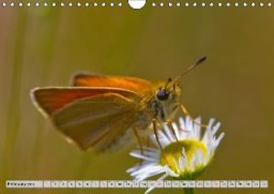Di Chito, U: Lepidoptera - The Season of the Butterfly - UK