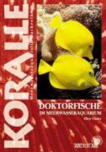 Doktorfische im Meerwasseraquarium