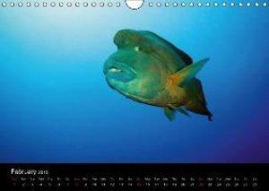 Sven Gruse Under Water! Fish Shooting (Wall Calendar 2015 DIN A4