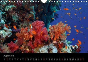 Sven Gruse Under Water! Fish Shooting (Wall Calendar 2015 DIN A4