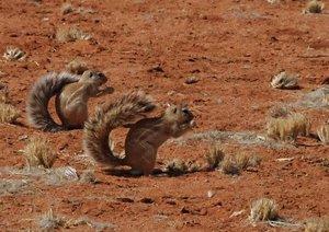 Namibische Tierwelten (Posterbuch DIN A4 quer)