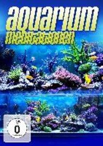 Aquarium Meditation