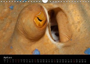 Sven Gruse Under Water - Fish Close Up (Wall Calendar 2015 DIN A