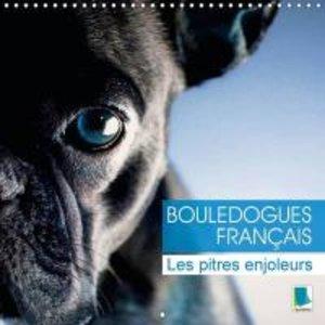 Bouledogues Francais - Les Pitres Enjoleurs