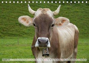 Glückliche Kühe auf saftigen Wiesen (Tischkalender 2016 DIN A5 q