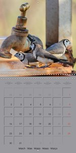 Australian Birds (Wall Calendar 2015 300 × 300 mm Square)