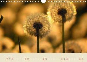 Inconspicuous Beauty - Dandelion (Wall Calendar 2015 DIN A4 Land