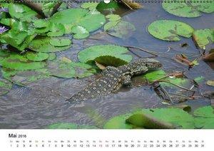 Faszination - Echsen (Wandkalender 2016 DIN A2 quer)