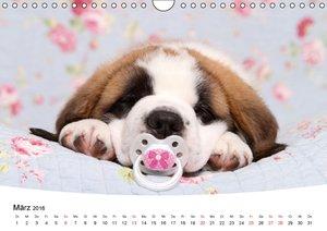 Süße Träume 2016 - schlafende Hundewelpen (Wandkalender 2016 DIN