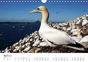 Wildlife of Europe 2015 (Wall Calendar 2015 DIN A4 Landscape)
