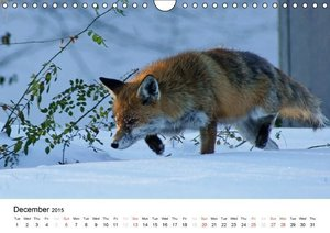 Wildlife of Europe 2015 (Wall Calendar 2015 DIN A4 Landscape)
