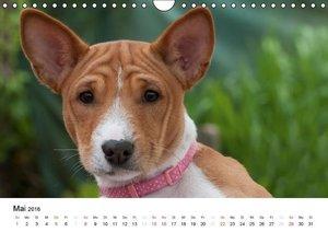 Bezaubernde Basenji-Welpen (Wandkalender 2016 DIN A4 quer)