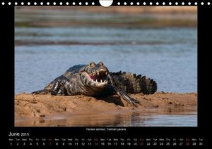 Animals of the Pantanal / UK Version (Wall Calendar 2015 DIN A4