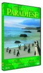 Die Pinguine Vom Kap Der Guten Hoffnung