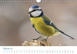 Singvögel - 12 Arten im Garten (Wandkalender 2017 DIN A4 quer)