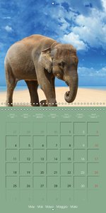 Elephants . Fun at the Beach (Wall Calendar 2015 300 × 300 mm Sq